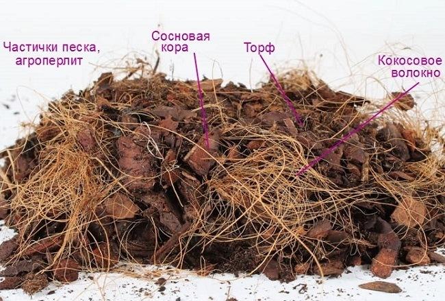 Состав грунта для фаленопсиса