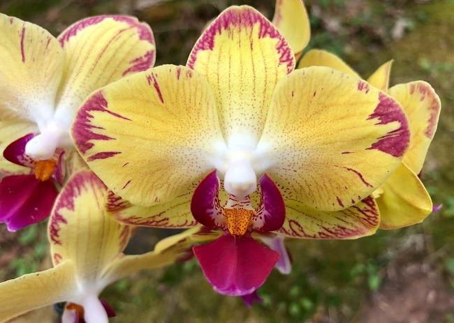 Губа орхидеи попугай фото
