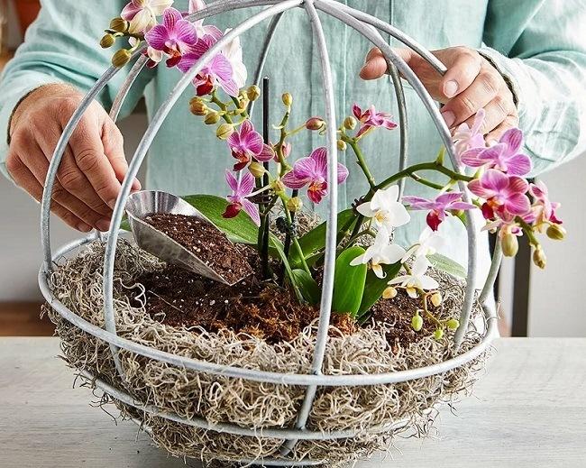 Орхидея в корзине