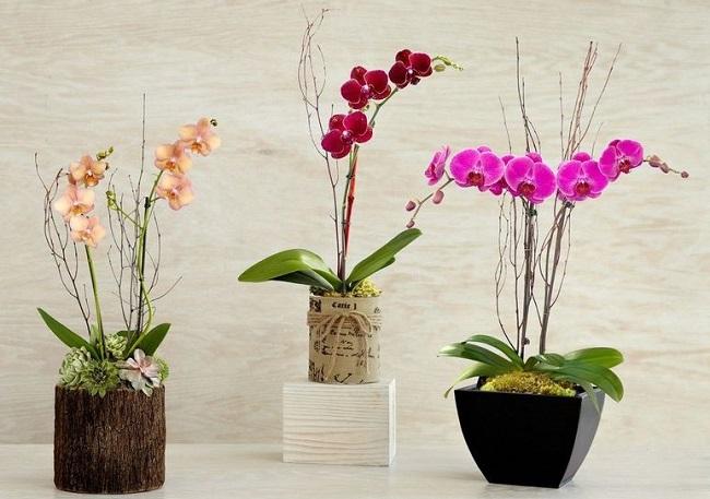 Расстояние между орхидеями