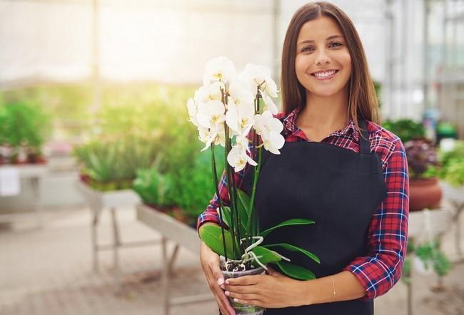 Выбор орхидеи
