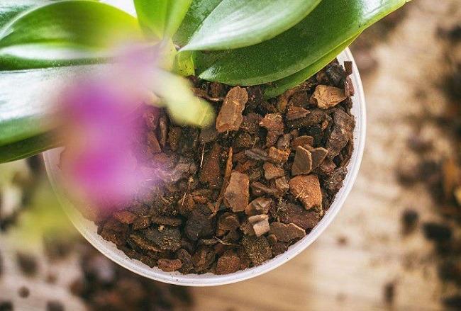 Субстрат и горшок орхидеи