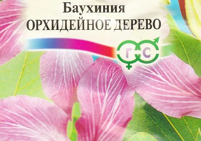 Семена баухинии орхидейного дерева