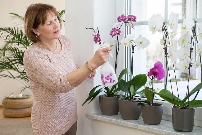 Опрыскивание цветов фаленопсиса