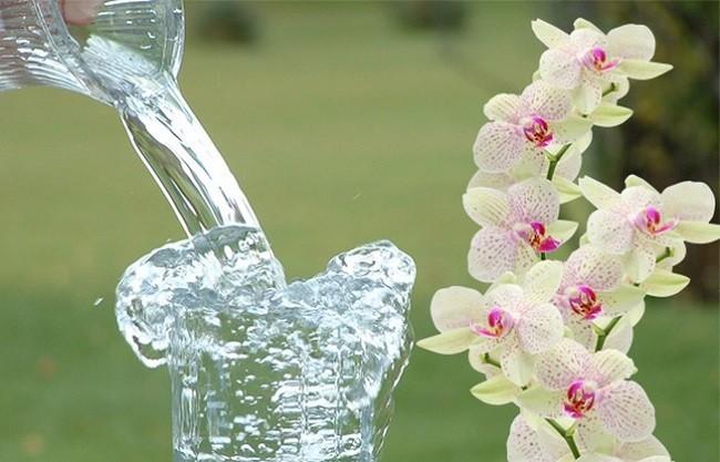 Вода для полива орхидеи