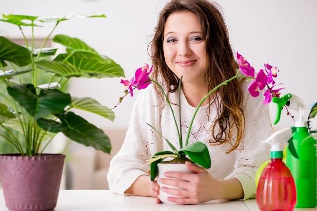 Осмотр орхидеи дома