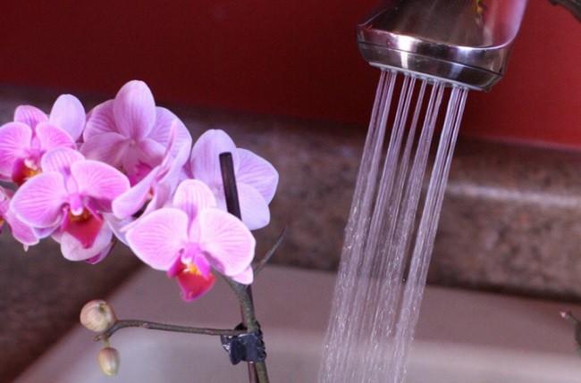 Душ для орхидеи