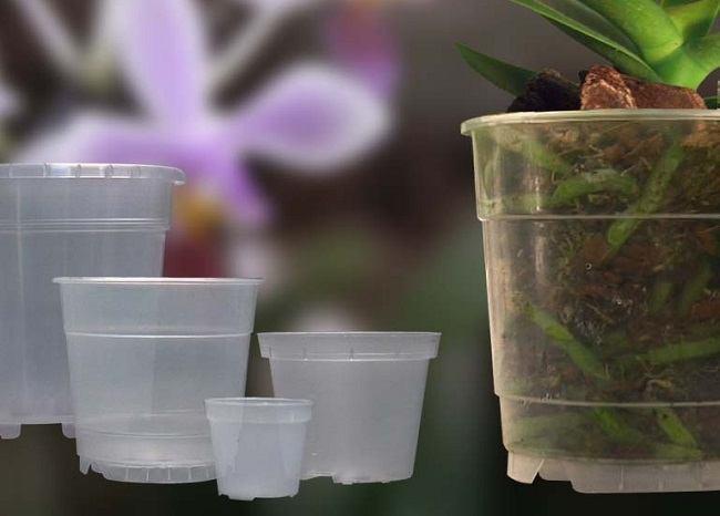 Прозрачный горшок для фаленопсиса
