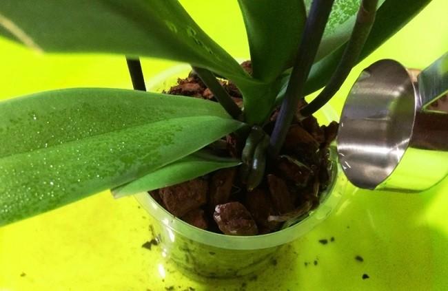 Погружной полив орхидеи