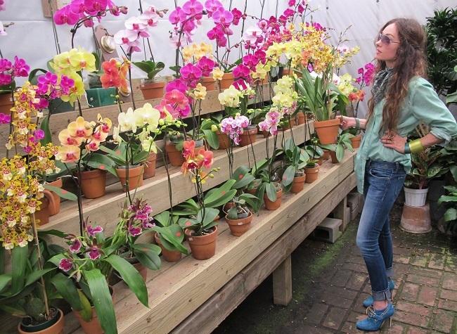 Разнообразие орхидей в магазине