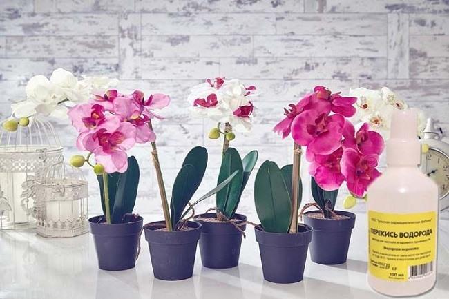 Перекись водорода для орхидей
