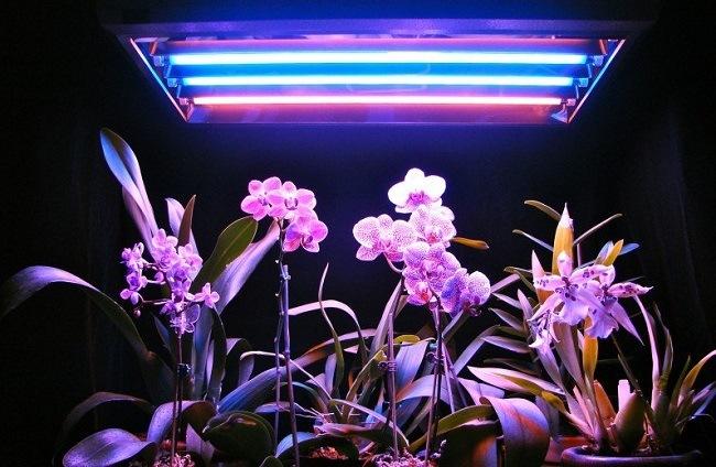 Подсветка для орхидей