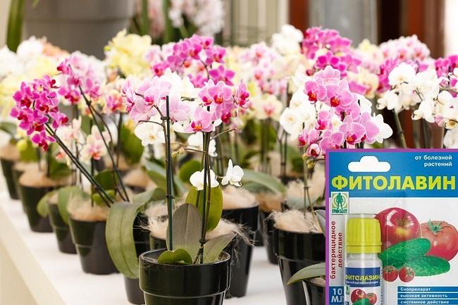 Как применять фитолавин для орхидей