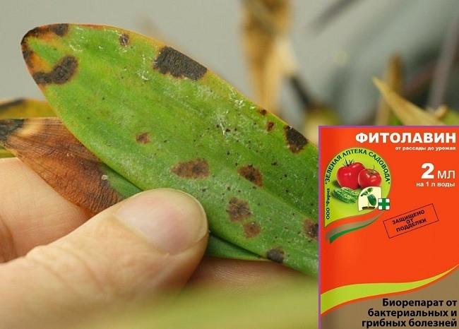 Фитолавин для обработки орхидей