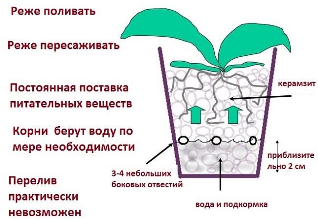 Схема посадки орхидеи в керамзит
