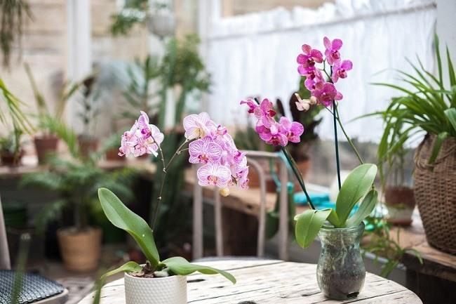 Цыетущие орхидеи дома
