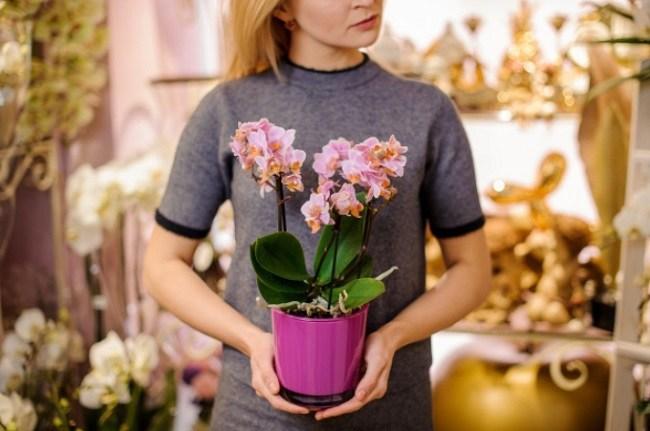 Девушка держит орхидею в горшке