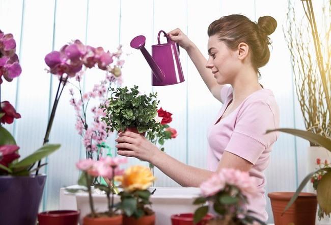 Полив и подкормка орхидей