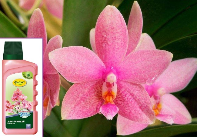 Удобрение для орхидей Фаско способ применения