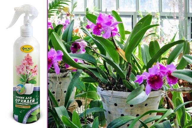 Спрей для орхидей Цветочное счастье
