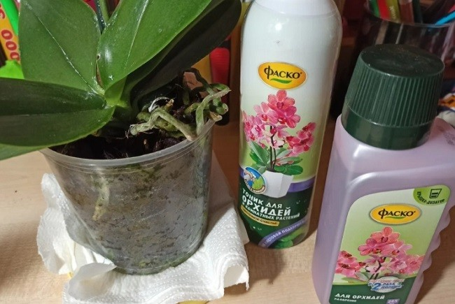 Фаско - форма выпуска для орхидей