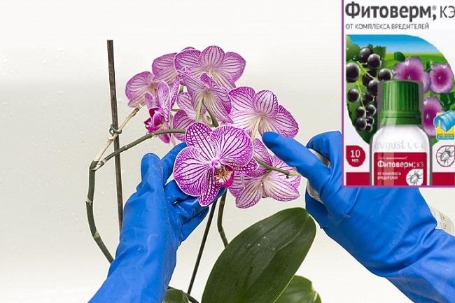 Фитоверм для орхидей как применять