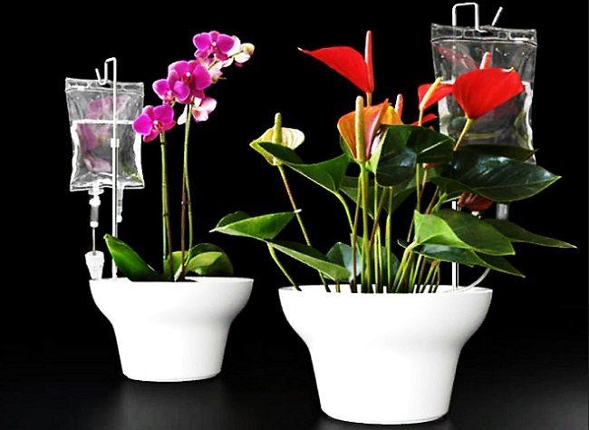 Автополив домашних цветов