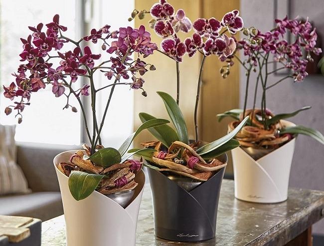 Орхидея с автополивом
