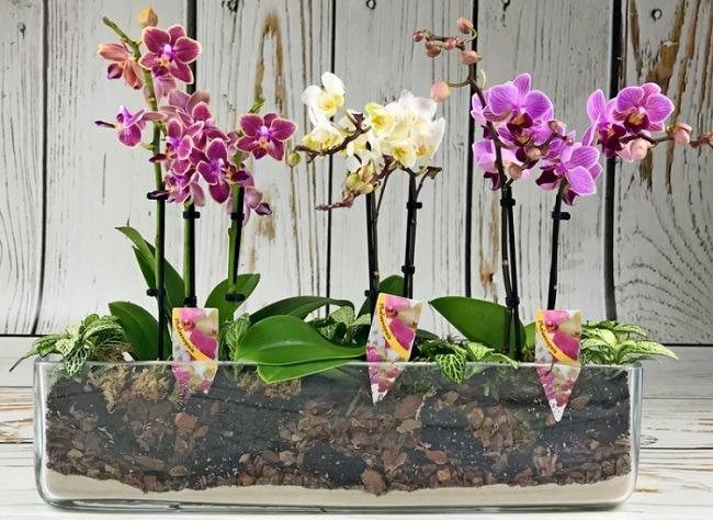 Расположение орхидей в горшке