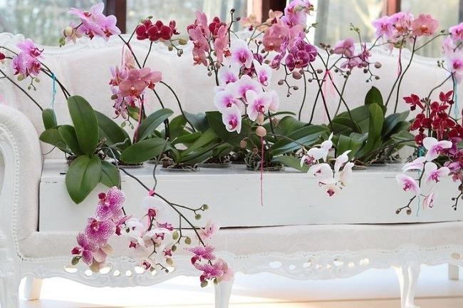 Декор интерьера орхидеями