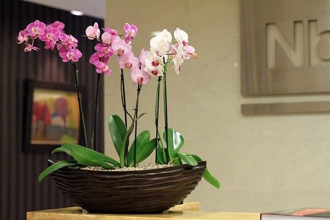 Групповая посадка орхидей