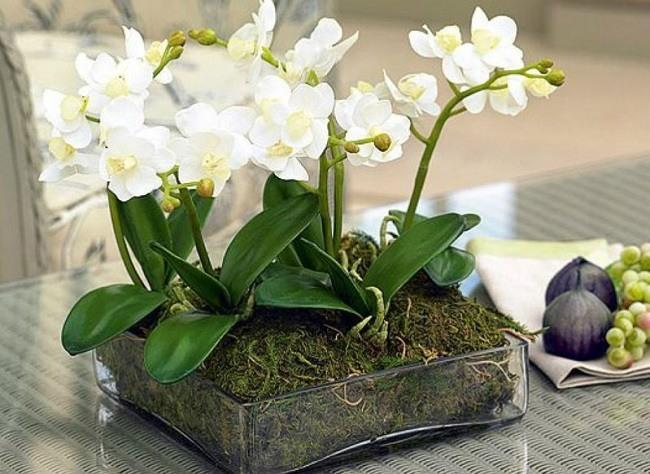 Мини орхидеи в одном кашпо