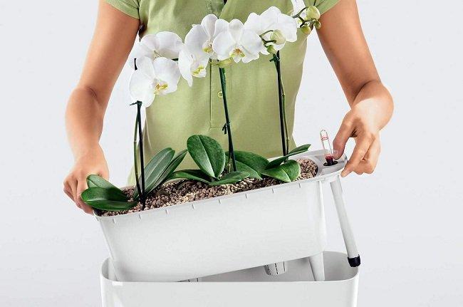 Двойной горшок для орхидеи