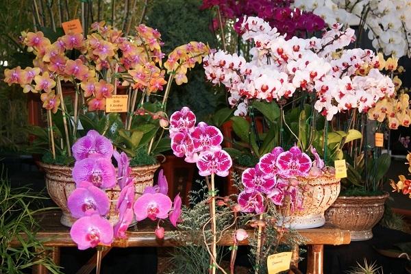 Разнообразие орхидей в больших горшках