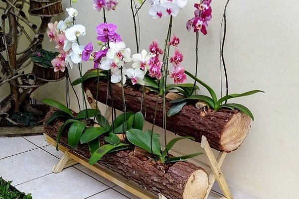 Посадка орхидей в бревно