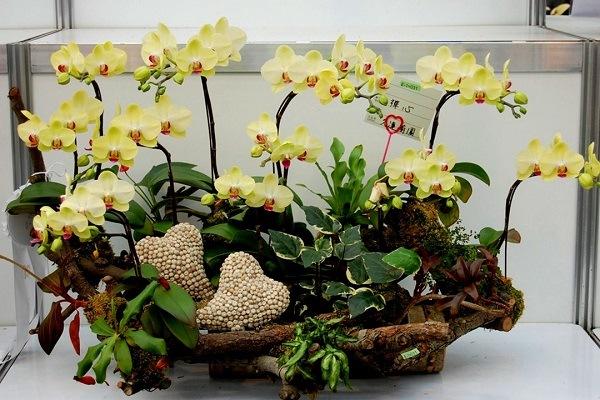 Декоративная композиция из желтых орхидей