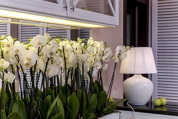 Перегородка из орхидей