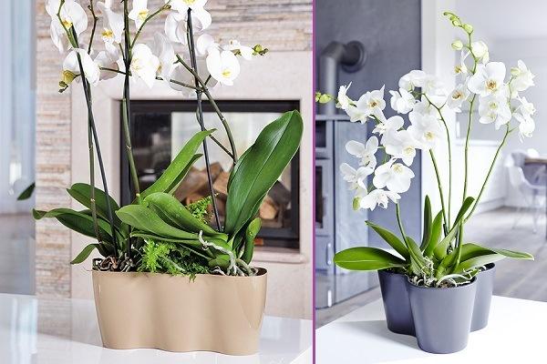 Тройной горшок для орхидей