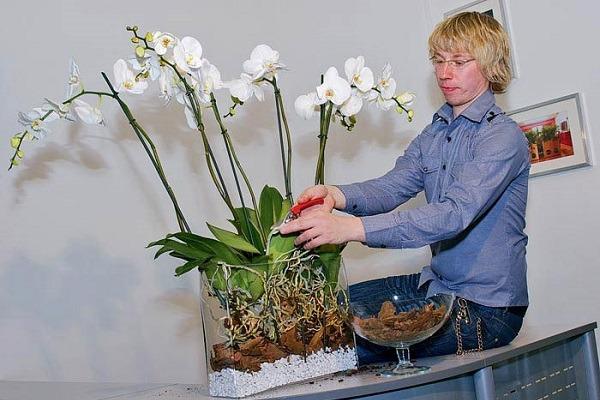Размещение орхидей в вазоне