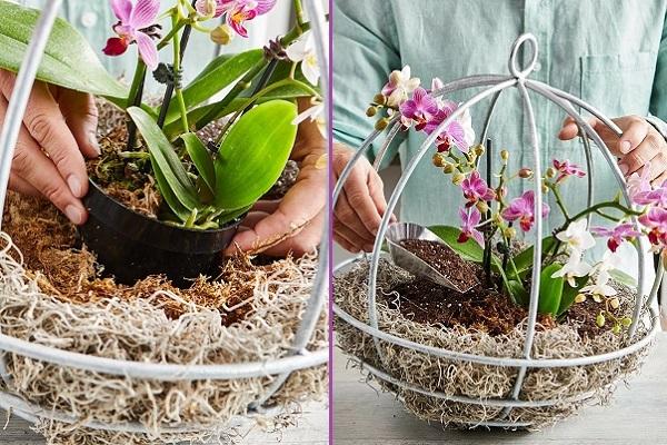 Подвесная композиция с орхидеями