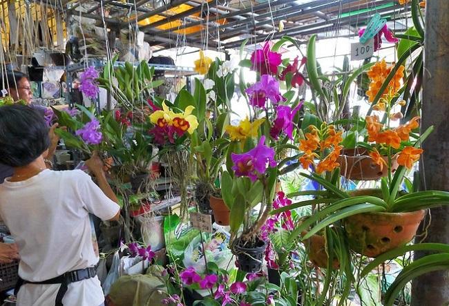 Магазин орхидей во Вьетнаме