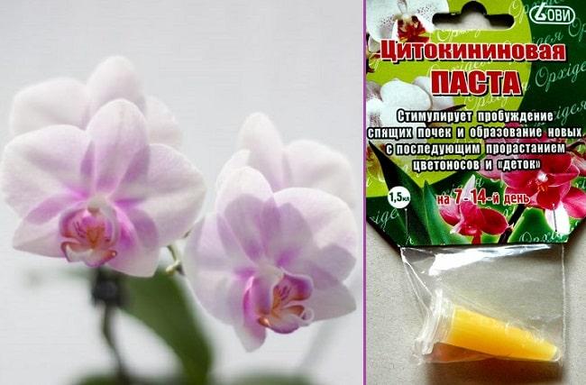 Стимуляция цветения орхидеи