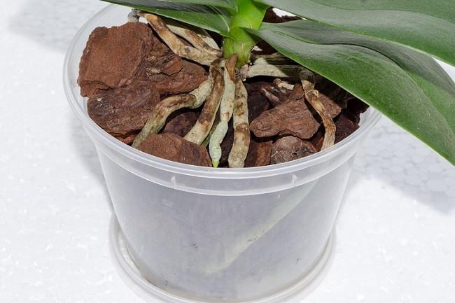 Сухой субстрат орхидеи