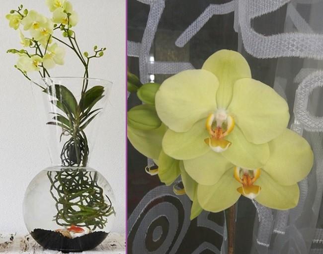 Декоративные корни орхидеи