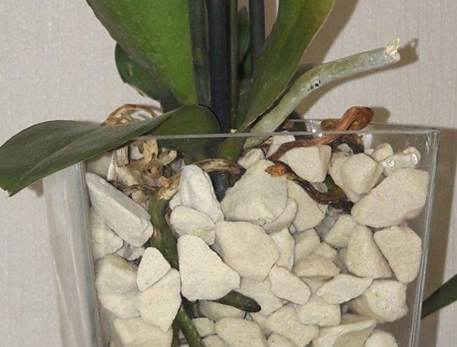 Посадка орхидеи в пеностекло