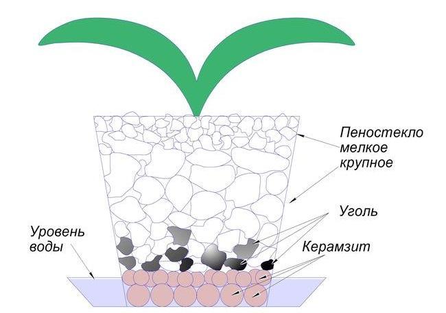Схема посадки орхидеи