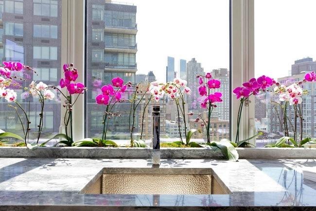 Много орхидей возле окна