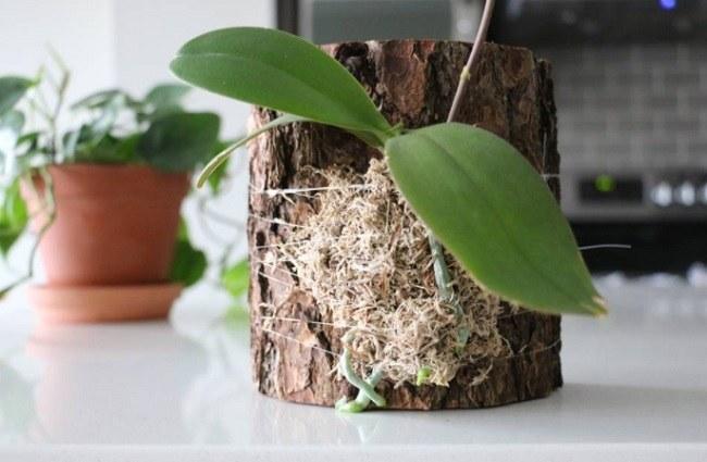 Блочная посадка орхидеи