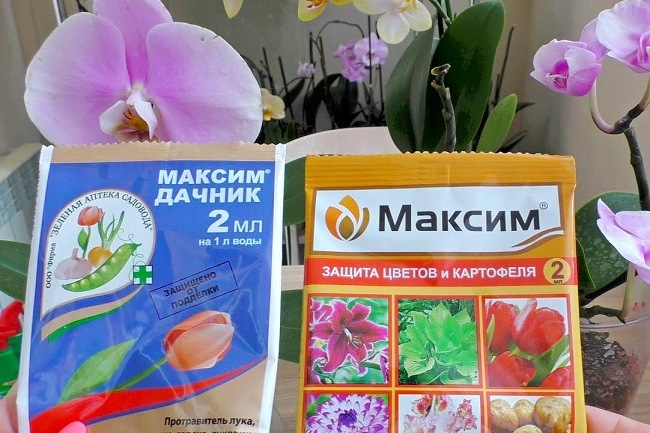 Максим и Максим Дачник