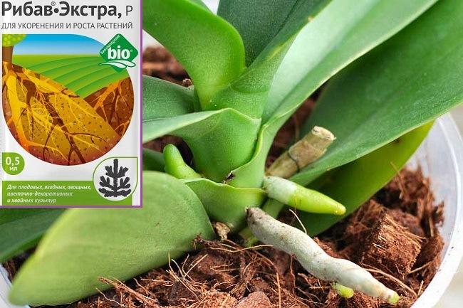 Рибав-Экстра для корнеообразования у орхидей